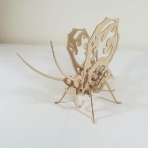 Firewing Butterfly